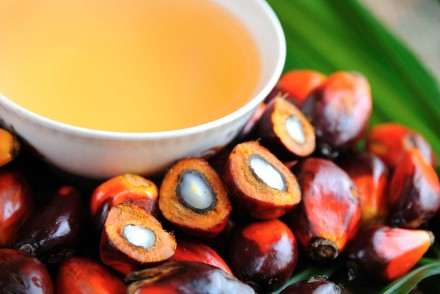 palm oil and human health