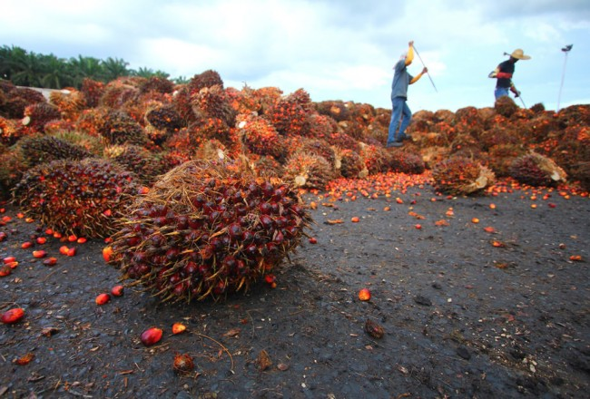 Palm oil and the social impact