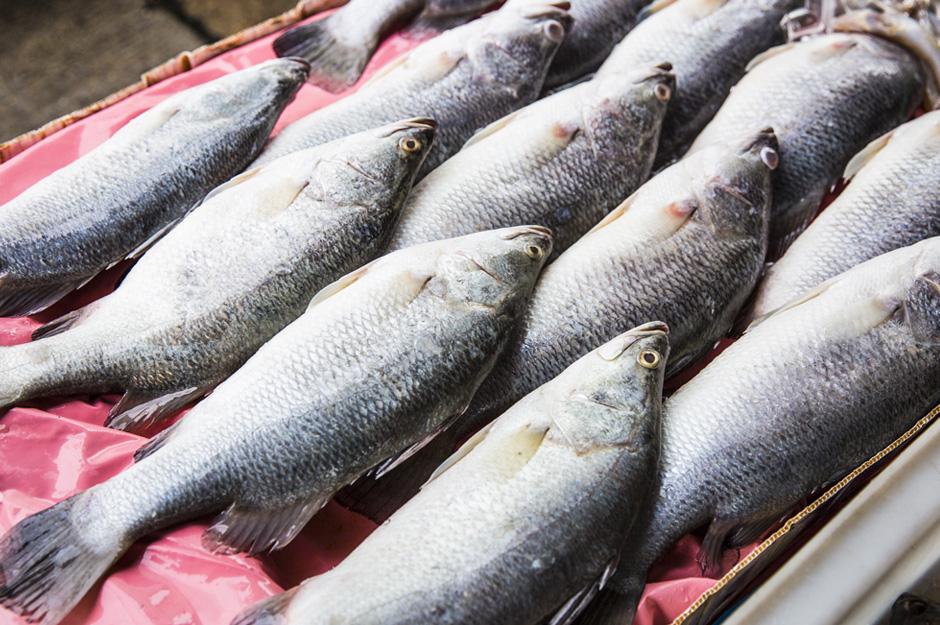 Barramundi distribution lifecycle and cooking for Barramundi fish taste