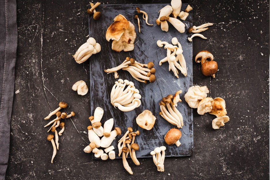 Edible mushrooms: infographic