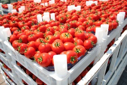 fruit and vegetable export