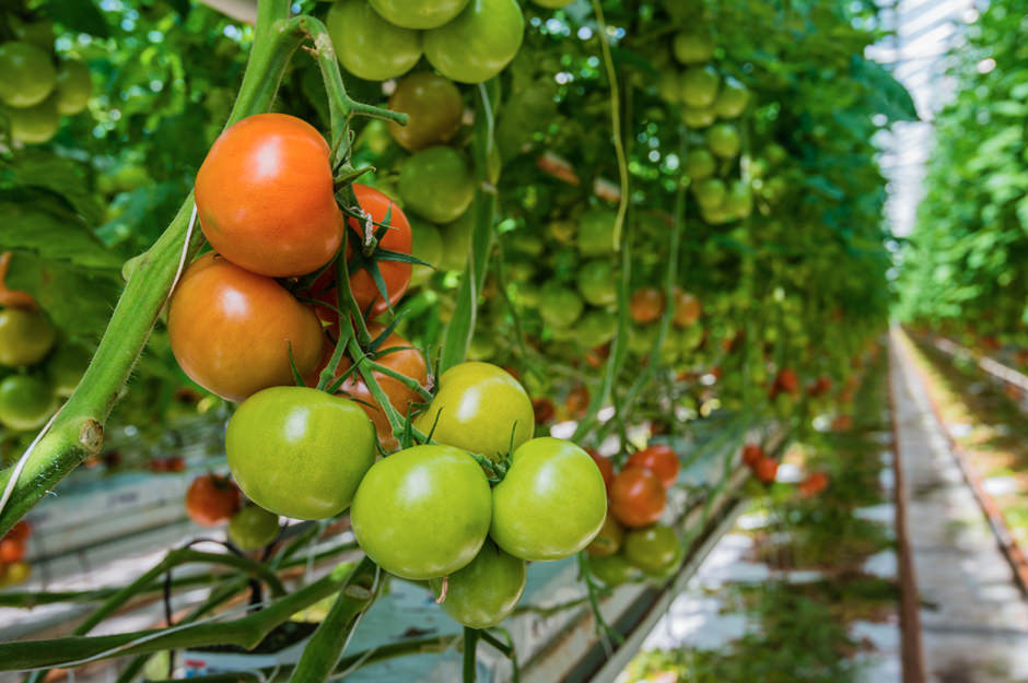 Growth Trends In European Organic Food And Farming