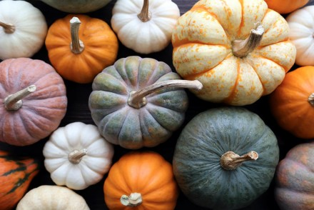 Pumpkins in the Italian cuisine